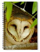 Peering Barn Owl Spiral Notebook