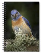 Peering Spiral Notebook