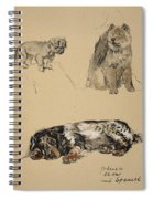 Pekinese, Chow And Spaniel, 1930 Spiral Notebook