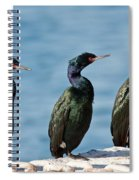Pelagic Cormorants Spiral Notebook