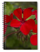 Pelargonium Spiral Notebook