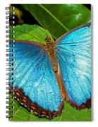 Peleides Blue Morpho Spiral Notebook
