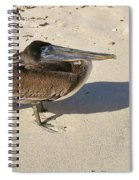 Pelican And His Shadow Spiral Notebook