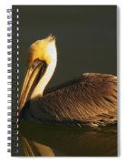 Pelican At Dark Spiral Notebook