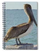 Pelican At The Gulf Spiral Notebook