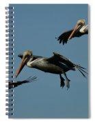 Pelican Collage Spiral Notebook