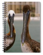 Pelican Couple Spiral Notebook