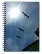 Pelican Flight Spiral Notebook