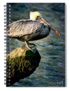 Pelican On A Pole Spiral Notebook