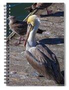 Pelican On Dock Spiral Notebook