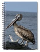Pelican On Driftwood Spiral Notebook