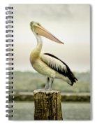 Pelican Poise Spiral Notebook