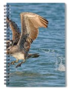 Pelican Taking Off Spiral Notebook