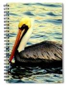 Pelican Waters Spiral Notebook