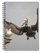 Pelican Wins Sea Gull Looses Spiral Notebook