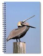 Pelican Yawn Spiral Notebook