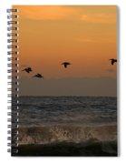 Pelicans At Sunrise 4674 Spiral Notebook