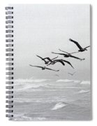 Pelicans Dinning At The Rip Spiral Notebook