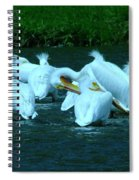 Pelicans Hanging Out Spiral Notebook