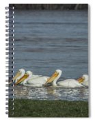 Pelicans In Floodwaters Spiral Notebook