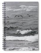 Pelicans Lunching At Ft. Stevens Oregon Spiral Notebook