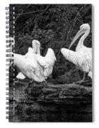 Pelicans Mono Spiral Notebook