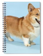 Pembroke Welsh Corgi Spiral Notebook