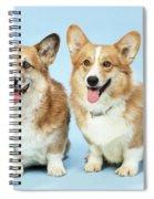 Pembroke Welsh Corgis Spiral Notebook