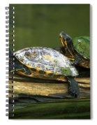 Peninsula Cooter Turtles Spiral Notebook