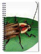 Pennsylvania Firefly Spiral Notebook