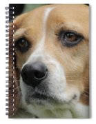 The Beagle Named Penny Spiral Notebook