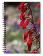 Penstemon Spiral Notebook