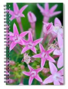 Pentas 'cranberry Punch' Flowers Spiral Notebook
