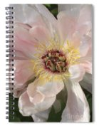 Peonie In Soft Pink Spiral Notebook