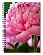 Peonies In The Pink Spiral Notebook