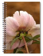 Peony After The Rain Spiral Notebook