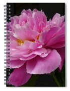 Peony Blossoms Spiral Notebook