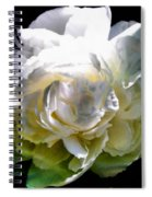 Peony In Morning Sun Spiral Notebook