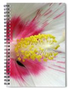 Peppermint Flame 01 Spiral Notebook