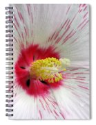 Peppermint Flame 04 Spiral Notebook