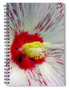Peppermint Flame 04a Spiral Notebook
