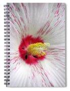 Peppermint Flame 05 Spiral Notebook