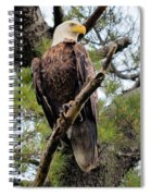 Perched After The Hunt Spiral Notebook