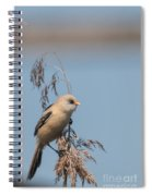 Perched Bearded Reedling Juvenile Spiral Notebook