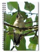 Perched Hummingbird Spiral Notebook