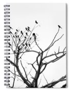Perched Majestically Spiral Notebook