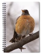 Perched Robin Spiral Notebook
