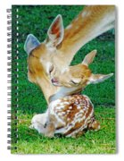 Pere David Deer And Fawn Spiral Notebook