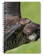 Peregrine Falcon 4 Spiral Notebook
