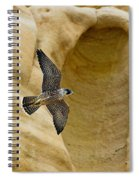 Peregrine Falcon Flying By Cliff Spiral Notebook